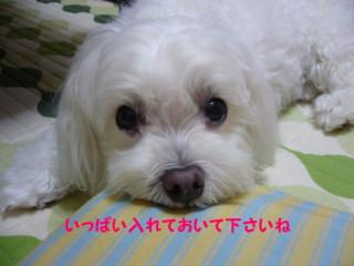 f0005727_1525769.jpg