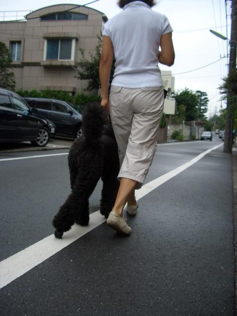 お散歩_f0098338_18335480.jpg