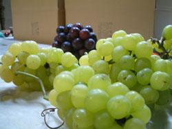 葡萄の収穫の終わり。_f0018099_19242173.jpg