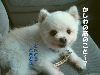 c0087521_1635357.jpg
