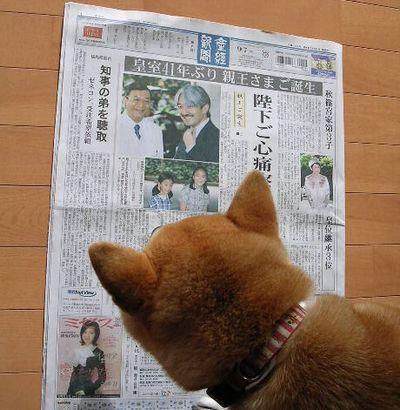 2006年9月7日(木)・・・ご親王さま、お誕生!_f0060461_10385884.jpg