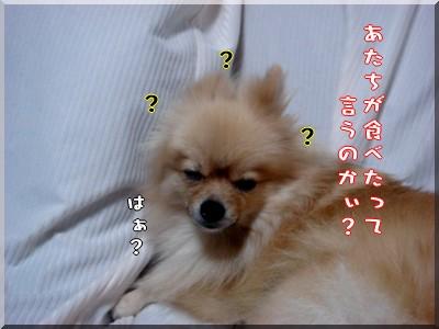 b0078073_231546100.jpg