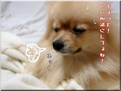 b0078073_2320724.jpg