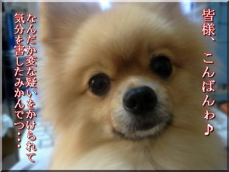 b0078073_2394361.jpg