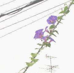 b0088089_19123815.jpg