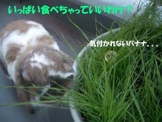 b0109692_1674571.jpg