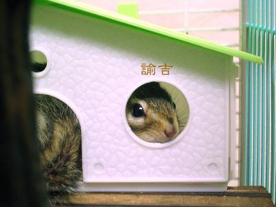 諭吉at別荘