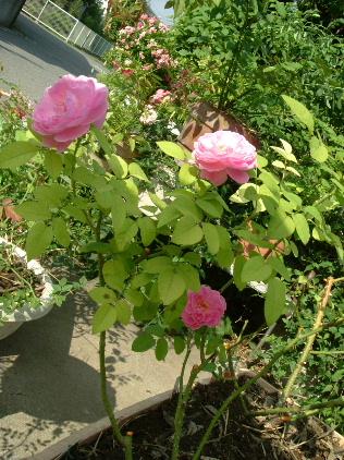 9月の庭_f0007106_510027.jpg