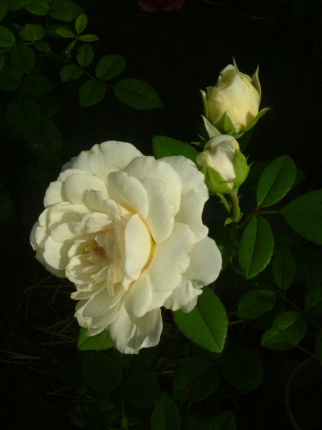 9月の庭_f0007106_5101923.jpg