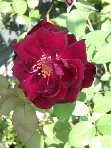 9月の庭_f0007106_5105474.jpg