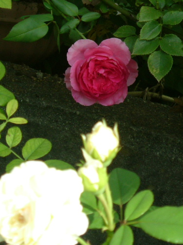 9月の庭_f0007106_5111920.jpg