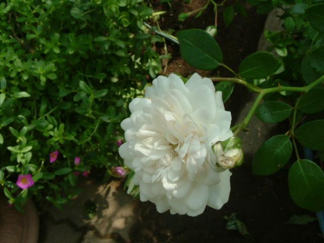 9月の庭_f0007106_5114571.jpg