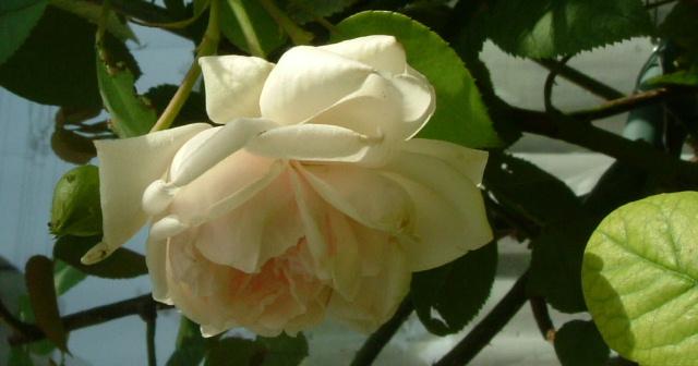 9月の庭_f0007106_514129.jpg