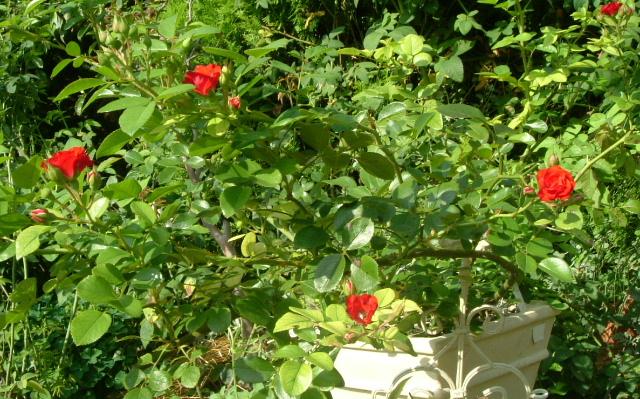 9月の庭_f0007106_5184822.jpg