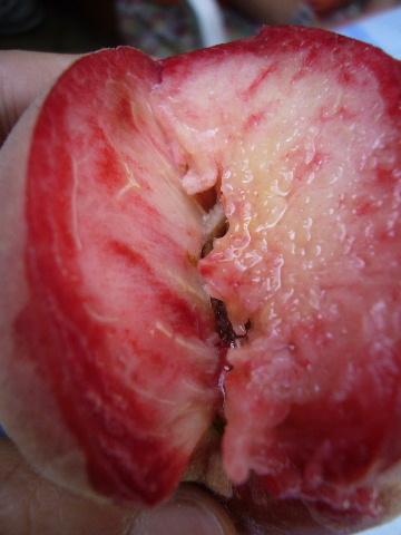 ■赤い桃(PECHE DE VIGNE)_a0014299_0445934.jpg