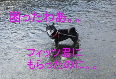 f0053952_12461336.jpg