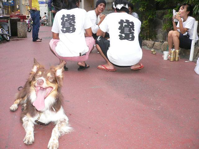 今日は氷川神社のお祭り_b0051654_22273246.jpg