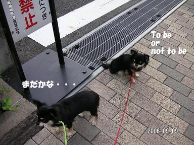 蒸し暑いじぇー_d0006467_2142414.jpg