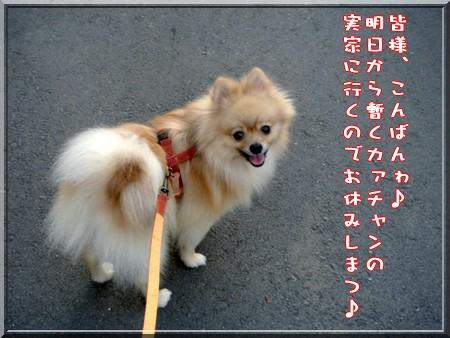 b0078073_046551.jpg