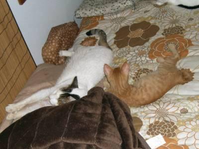 【4cats】 それぞれ個性も出てくるかな…_a0066779_2315868.jpg