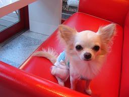 赤いソファーがお気に入り☆☆☆_b0084929_0384979.jpg