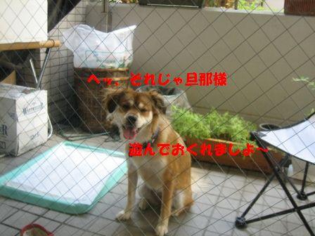 b0054391_14475285.jpg