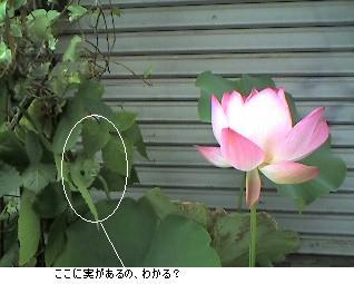 d0043369_224122100.jpg