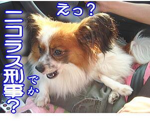f0011845_036112.jpg