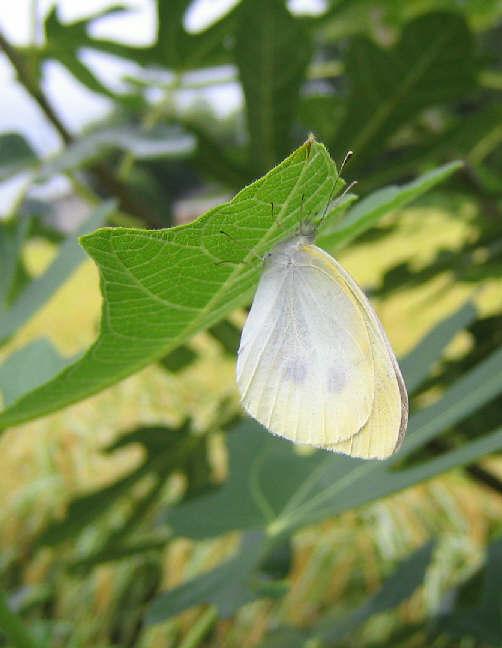 朝の庭で・・・_d0047885_20221329.jpg
