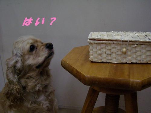 b0067012_231813.jpg