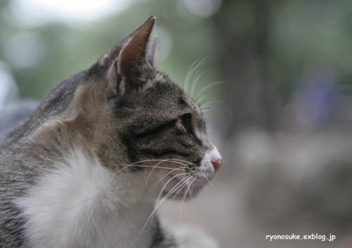street\'s cat\'s_f0031022_0475876.jpg