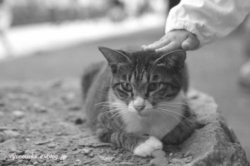 street\'s cat\'s_f0031022_0481861.jpg
