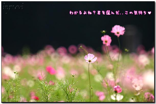 d0015026_8551274.jpg