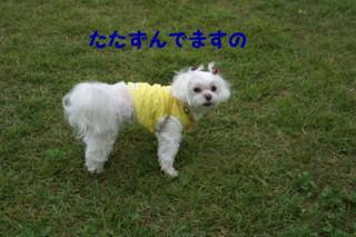 f0005727_16428100.jpg