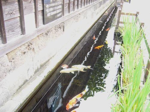 心の旅 臼杵・野上八重子記念館から蒲江の浦へ。。。.゜。*.。♡_a0053662_2155199.jpg