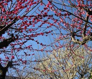 うめの木/ The plum trees_d0090888_13582991.jpg