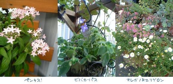 d0020136_17201894.jpg