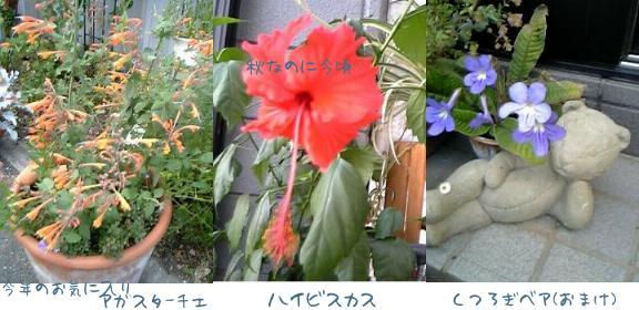 d0020136_17203070.jpg