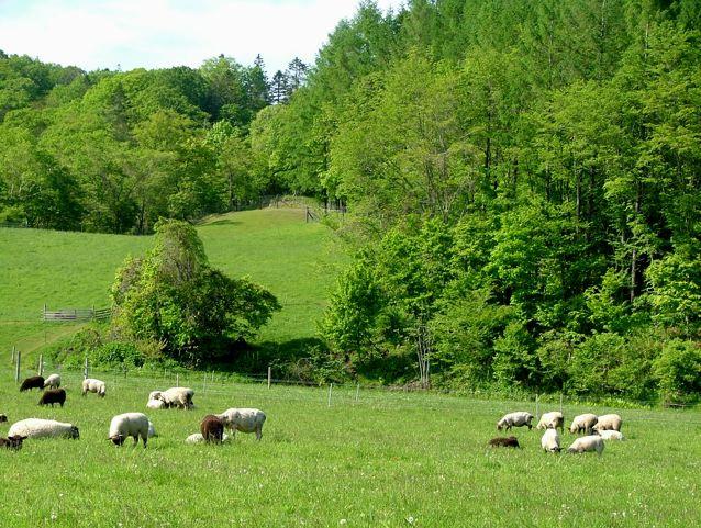 近くにある羊牧場さんにて♪_a0057237_942387.jpg