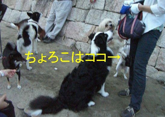 f0053952_1525724.jpg