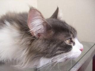 猫モデル_e0057975_184682.jpg