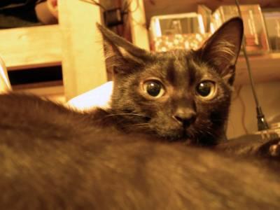 【4cats】 徐々に…_a0066779_23103298.jpg