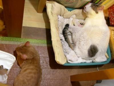【4cats】 徐々に…_a0066779_23315584.jpg