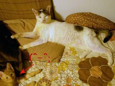 【4cats】 徐々に…_a0066779_23383524.jpg