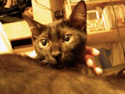 【4cats】 徐々に…_a0066779_2355681.jpg