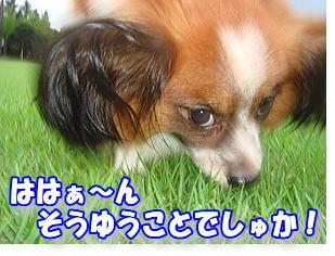 f0011845_20324753.jpg