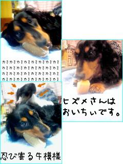 b0048649_14431434.jpg