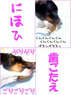 b0048649_14571647.jpg