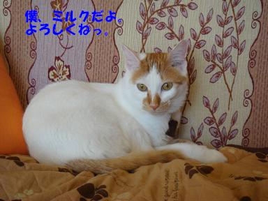 f0046854_2071079.jpg