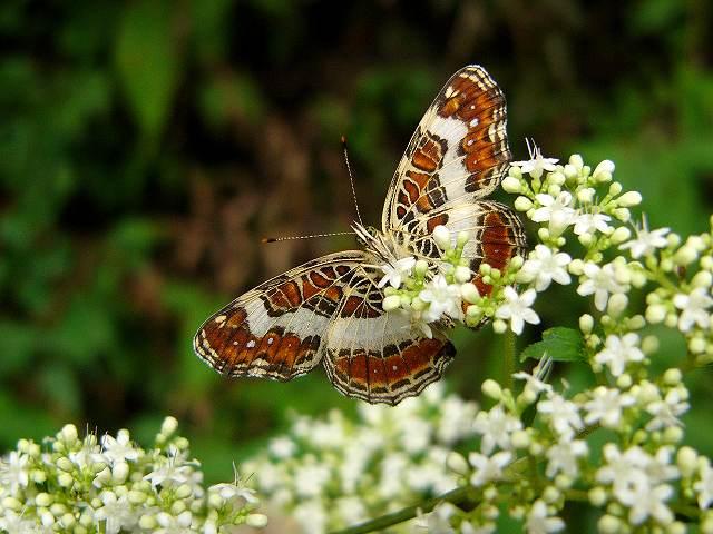 蝶 ~山の中で~_e0063851_18143930.jpg